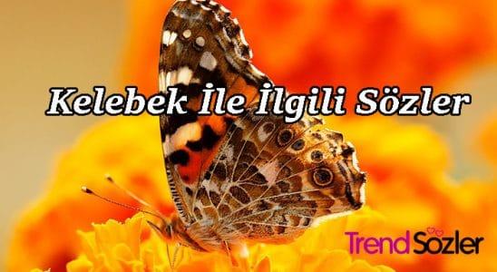 kelebek ile ilgili sözler